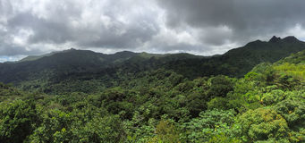 Jungles in El Yunque National  Forest Royalty Free Stock Image