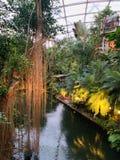 Jungles stock photos