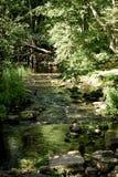 Jungles locales dans Kurzeme sur la rivière Riva images libres de droits