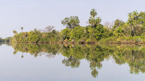 The jungles and river Royalty Free Stock Photography