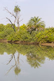 The jungles and river Stock Images