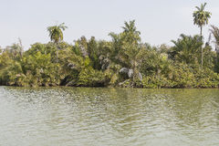 The jungles and river Royalty Free Stock Photo