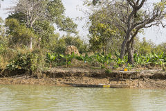 The jungles and river Stock Photo