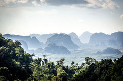 Jungles in Thailand. Tropical rainforest in Krabi, Thailand Stock Photography