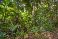 Jungles, Seychelles. Jungles on the way to Port Glaud Waterfall on Mahe island, Seychelles Royalty Free Stock Images