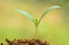 Jungpflanze über grünem Hintergrund und dem Anfang, zum für peop zu wachsen Lizenzfreie Stockfotos