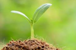 Jungpflanze über grünem Hintergrund und dem Anfang, zum für peop zu wachsen Stockfotografie