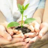 Jungpflanze in den Händen Lizenzfreie Stockfotos