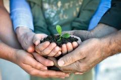 Jungpflanze in den Händen Lizenzfreies Stockbild