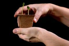 Jungpflanze in den Händen auf einem schwarzen Hintergrund Stockbilder