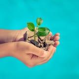 Jungpflanze in den Händen gegen blauen Seehintergrund Lizenzfreie Stockfotos