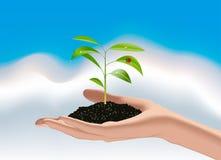 Jungpflanze in der Hand der Frau Lizenzfreie Stockfotos