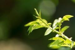 Jungpflanze in der Natur Lizenzfreie Stockfotos