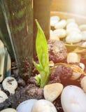 Jungpflanze, die im Sonnenlicht w?chst stockbild