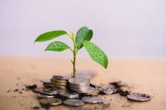 Jungpflanze wachsen und Münzen stapeln stockfotos