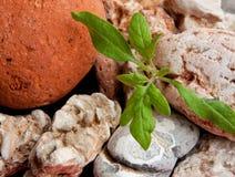 Jungpflanze zwischen Felsen Stockfotos