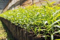 Jungpflanzen in den kleinen schwarzen Plastiktaschen Stockfotos