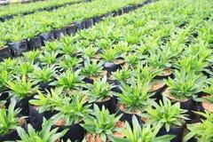 Jungpflanzen, die im Bauernhof wachsen Lizenzfreie Stockfotos