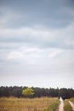 Jungvermählten gehen weit darüber hinaus der Horizont, der Weg, der in Holz führt Negativer Raum, Himmel Braut und Bräutigam zusa Stockfotografie