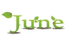 Junho ilustração stock