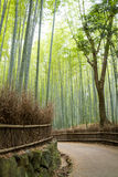 Juni 2012: Arashiyama, Kyoto, Japan: Een bamboeweg die de weg bekijken die weg naar de linkerkant buigen Stock Afbeelding