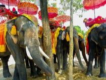 Juni 2011 Ayutthaya, Thailand - Elefanten und Inhaber stehen unter den Schattenbäumen still stockfotografie