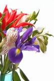 Juni-Blumen Lizenzfreies Stockfoto