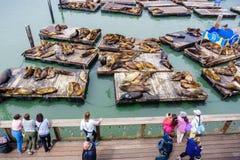 3 juni, 2019 San Francisco/CA/de V.S. - Toeristen die op zeeleeuwen letten rustend op houten platforms bij Pijler 39, één van de  royalty-vrije stock fotografie