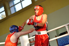 Junior boxing tournament Royalty Free Stock Photo