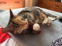 Junior Girl-de noteringen van de kattengestreepte kat Royalty-vrije Stock Foto's