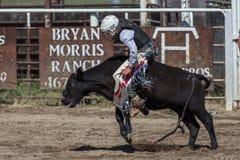 Junior Steer Rider Fotos de archivo