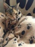Junior Tabby Cat Girl fresco Imágenes de archivo libres de regalías
