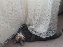 Junior Tabby Tortie Cat Resting stock foto's