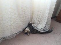 Junior Tabby Tortie Cat Resting stock fotografie