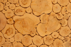 Juniper. Wood sections glued on plate Royalty Free Stock Images