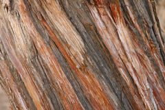 Juniper Bark Stock Images