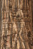 Juniper Bark Stock Photo
