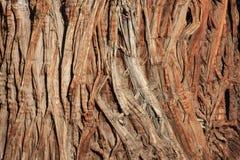 Free Juniper Bark Royalty Free Stock Photo - 18088815