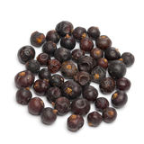 Juniper berries Royalty Free Stock Images