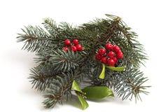 Juniper & berries. Red berries on blue juniper with deciduous leaves Royalty Free Stock Images