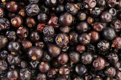 Juniper berries background Royalty Free Stock Photo