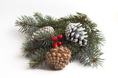 Juniper berries & cones Stock Image