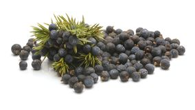 Juniper berries isolated on white background.  royalty free stock images
