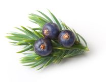 Juniper berries isolated Royalty Free Stock Images