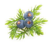Juniper berries isolated Royalty Free Stock Photography