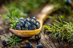 Juniper berries. On old wooden table stock images