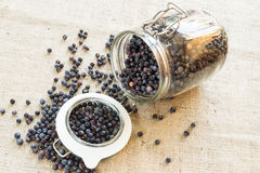 Juniper berries. In opened jar stock images