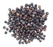 Juniper Berries over white Stock Photos