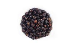Juniper berries Stock Photography