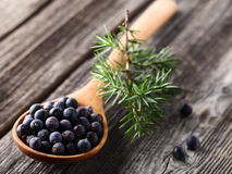 Juniper berries Stock Photos